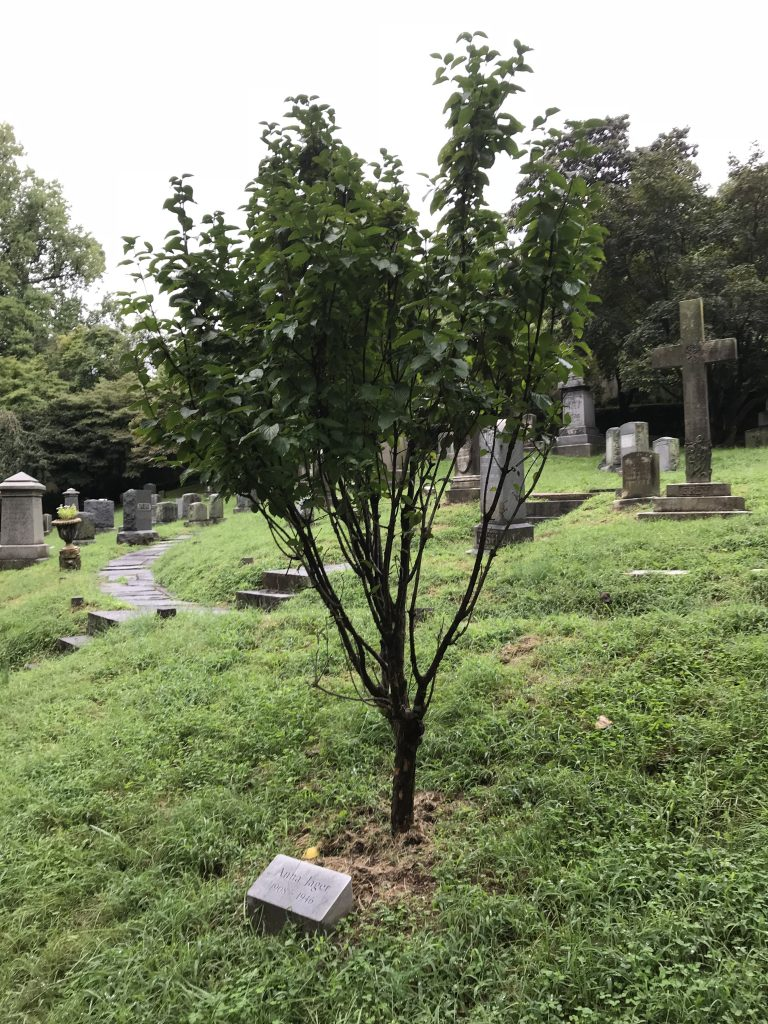 memorial tree program the oak hill cemetery